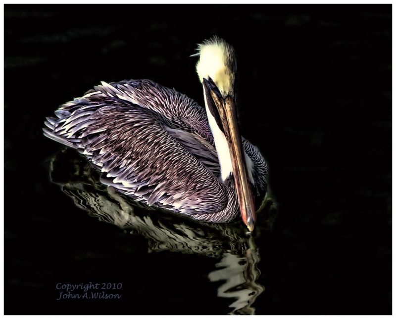 Pelican at Canaveral Lock