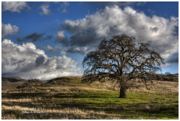 Pinoche Valley Oak on a Winter Day