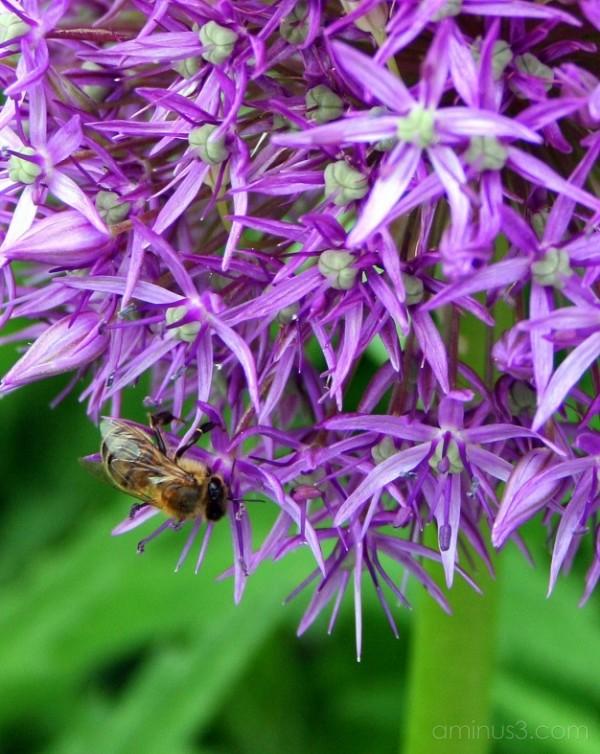 Eden Bee