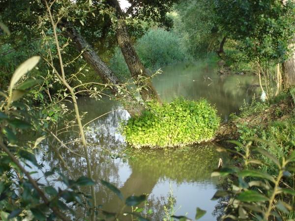 Rio Lis - Lis River