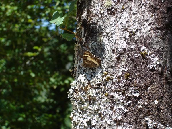 borboleta Mata-da-Margaraça serra-do-açor