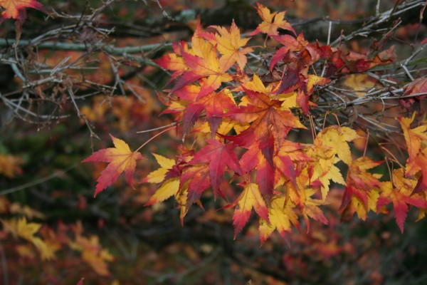Cores de Outono - Autumn colors