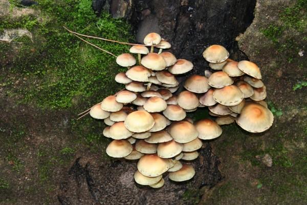 Cogumelos - Mushrooms