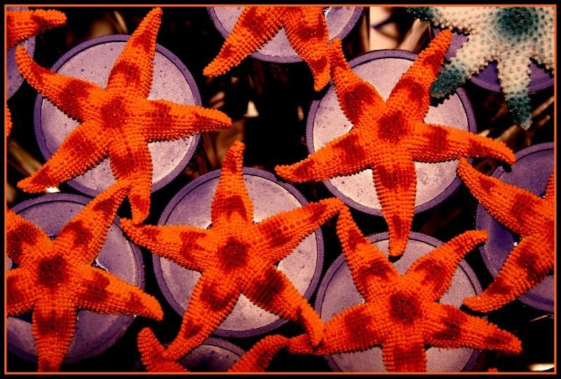 Estrelas - Stars