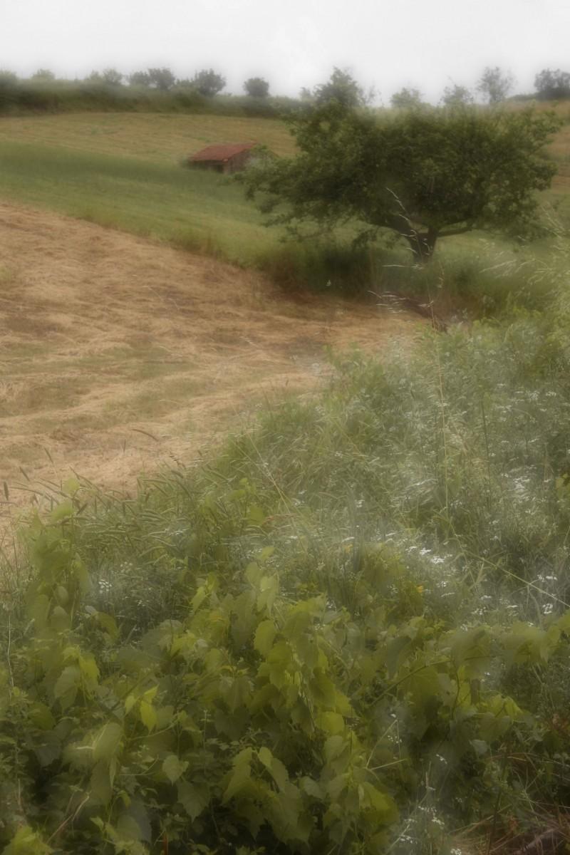 The Countryside III