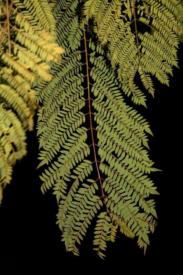 Folha - Leaf