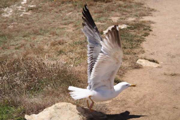 Uma gaivota...