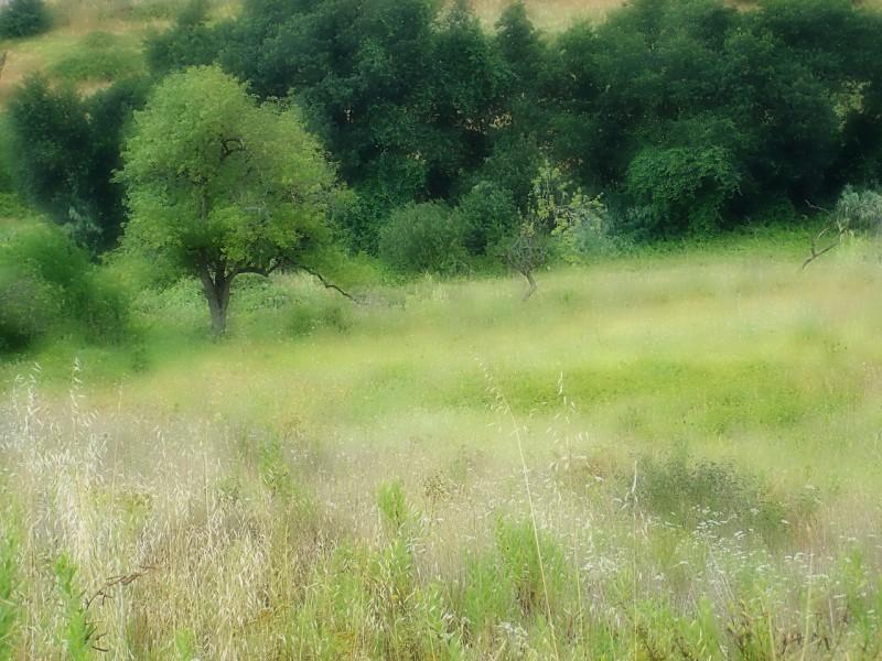 Countryside VI