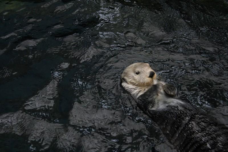 lontra oceanário