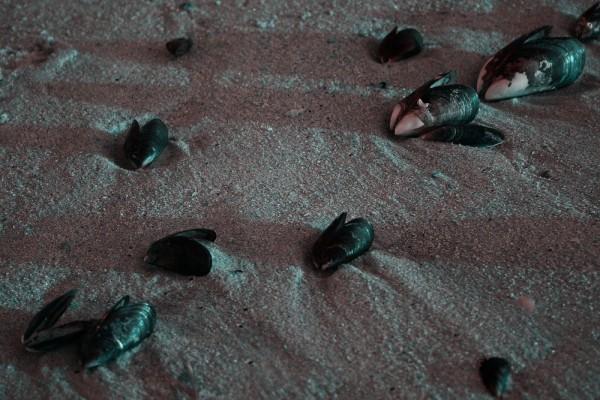 areia mexilhão