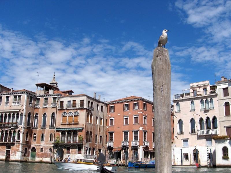 veneza italia gaivota