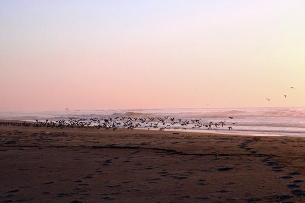 sunset praia mar paredesdavitoria gaivota