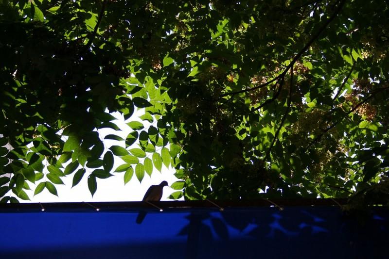pomba istambul turquia