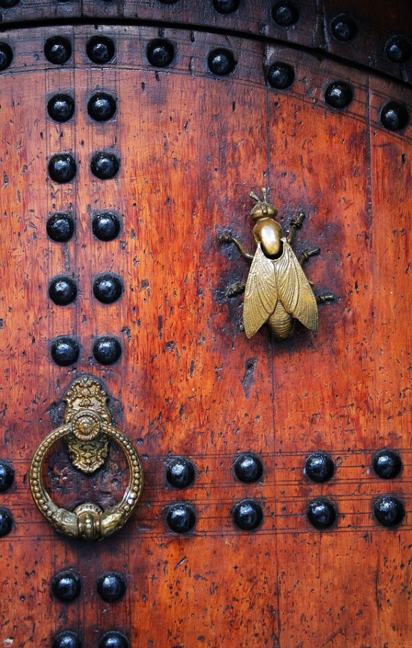Kasbah de Oudaia II - The fly