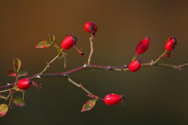 Lembranças de Outono - Memories of fall