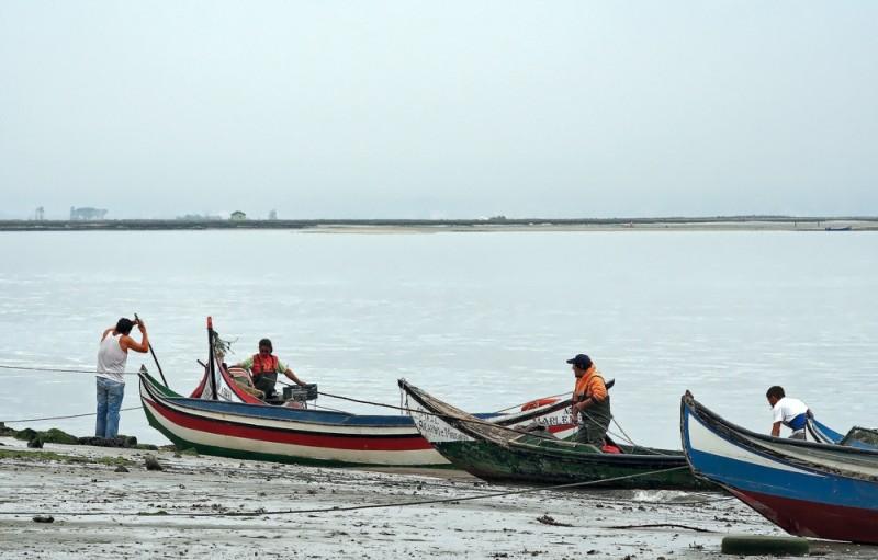 pescador ria-de-aveiro barcos
