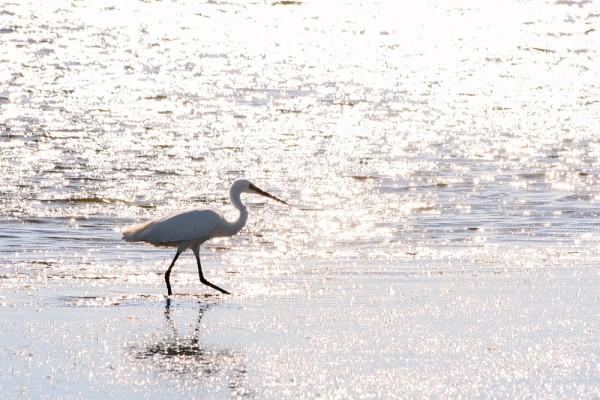 praia mar garça algarve