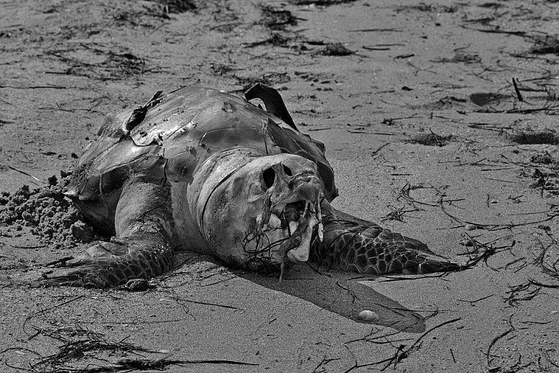 praia mar tartaruga algarve