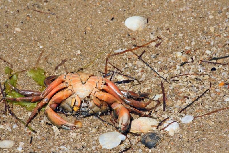 praia mar caranguejo algarve