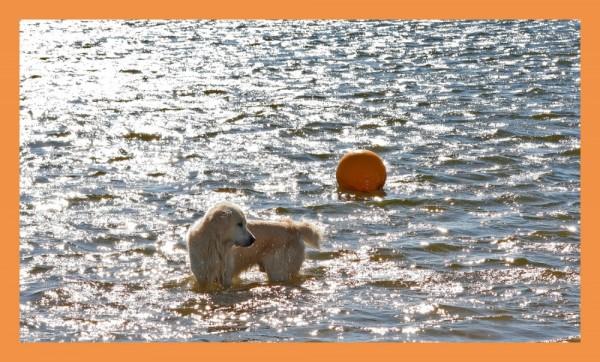 O cão e a bola