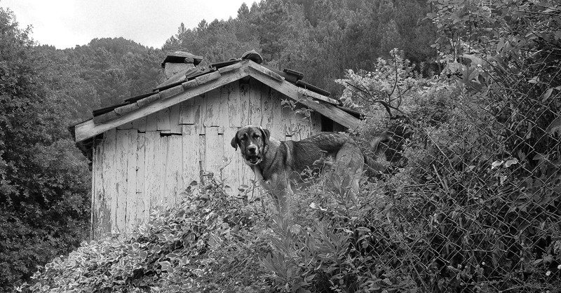 O guarda da casa - Gerês Series 14