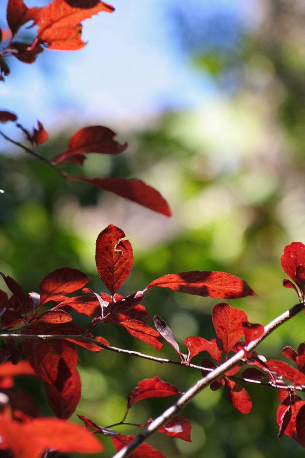 A glória do  Outono