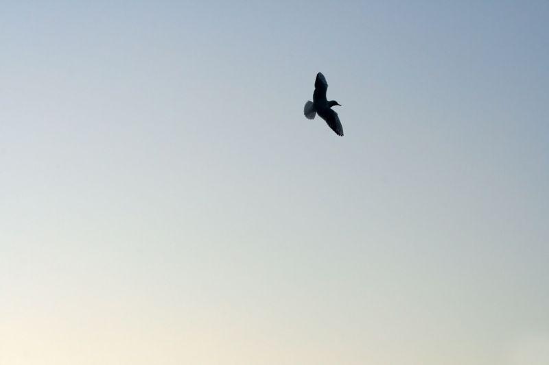 Fly III