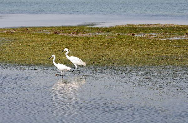 praia mar garças ilha-da-armona algarve