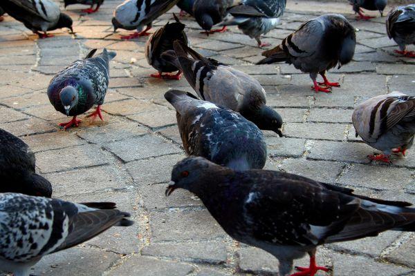 porto pombo ave