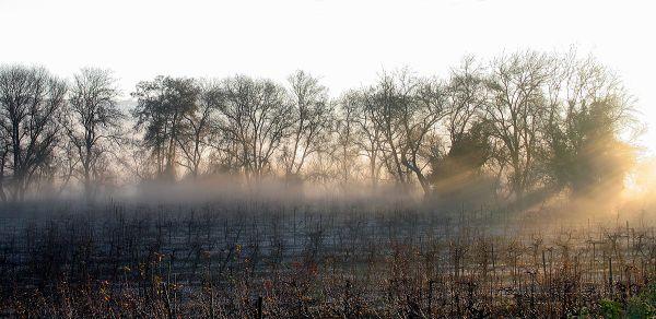 Numa manhã de nevoeiro...