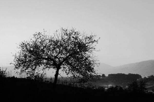 Numa manhã de Inverno - A winter morning