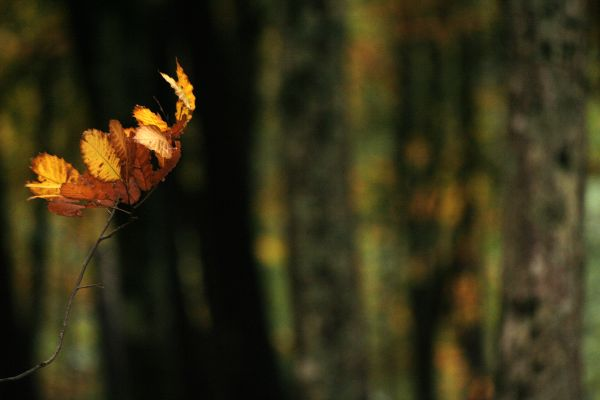 A yellow leaf