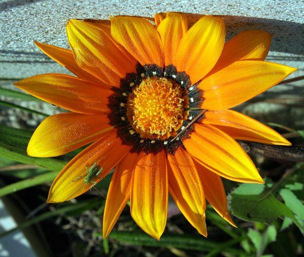 No meu jardim