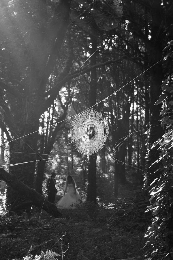 amor sintra peninha spider aranha web love teia