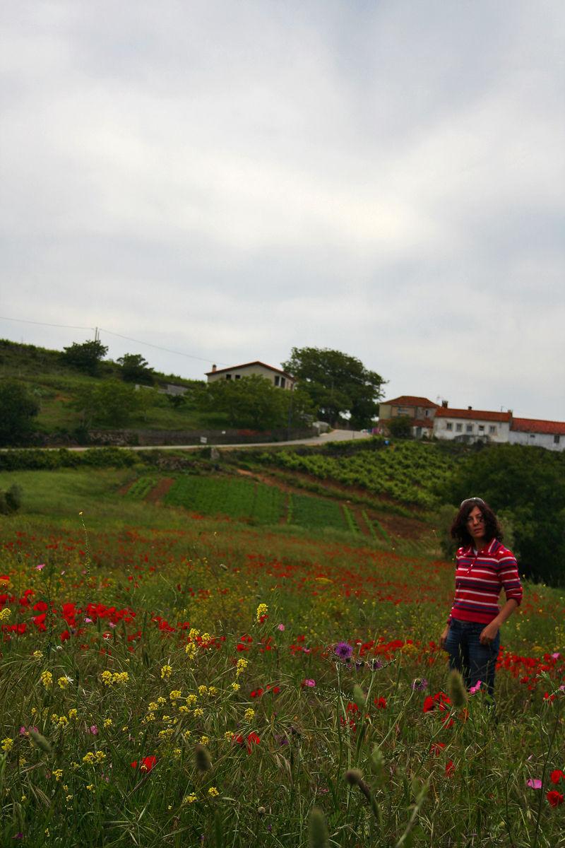 papoilas flor  aldeia