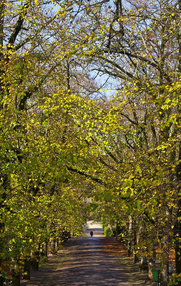 jardimbotanico outono coimbra