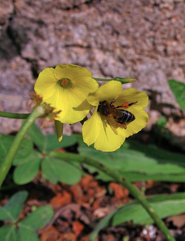 Harvesting pollen