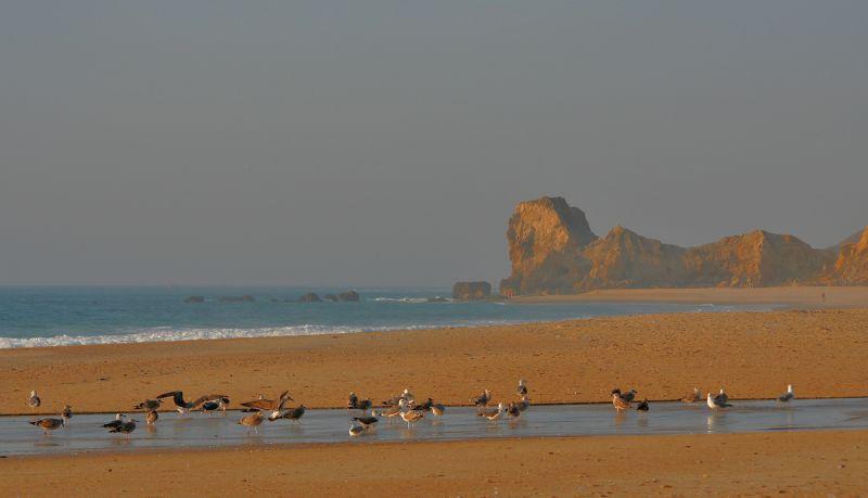 mar praia gaivota