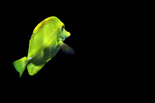 peixe oceanario aquário