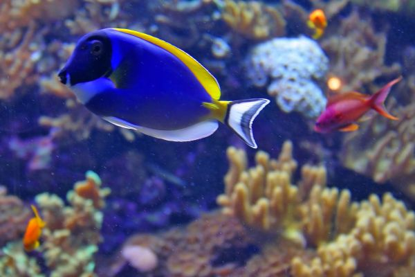 peixe oceanario