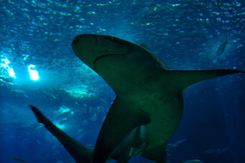 oceanario tubarao peixe