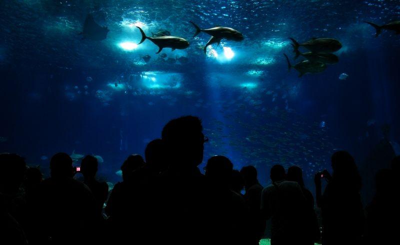 oceanario peixe