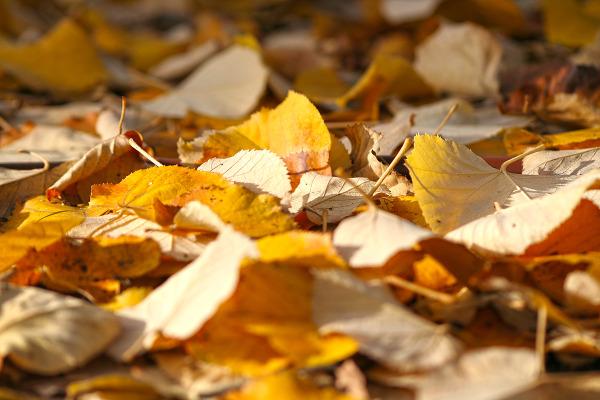 folhas outono