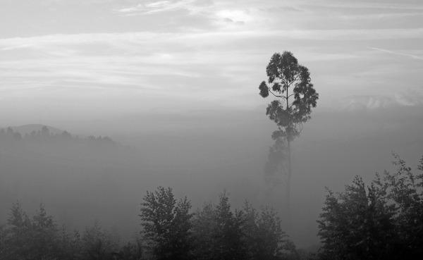 outono árvore  nevoeiro leiria eucalipto sunrise
