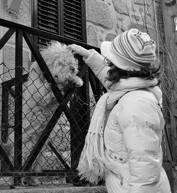 serraestrela  inverno cão