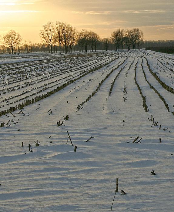 Ameide Holanda sunset inverno neve
