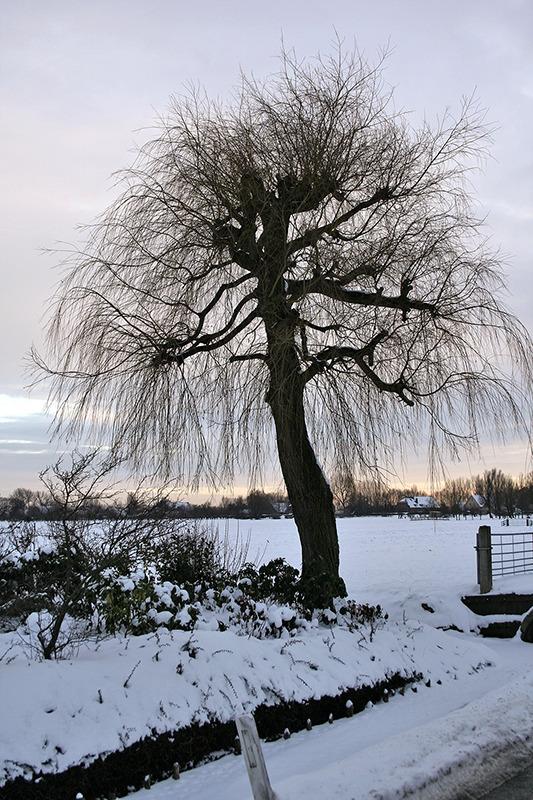 ameide holanda neve árvore inverno
