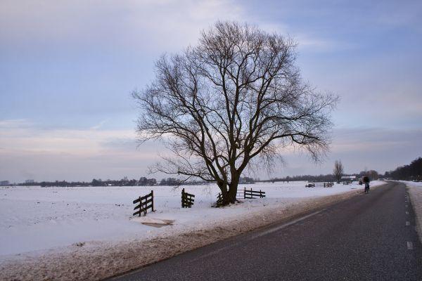 ameide holanda neve inverno árvore caminho
