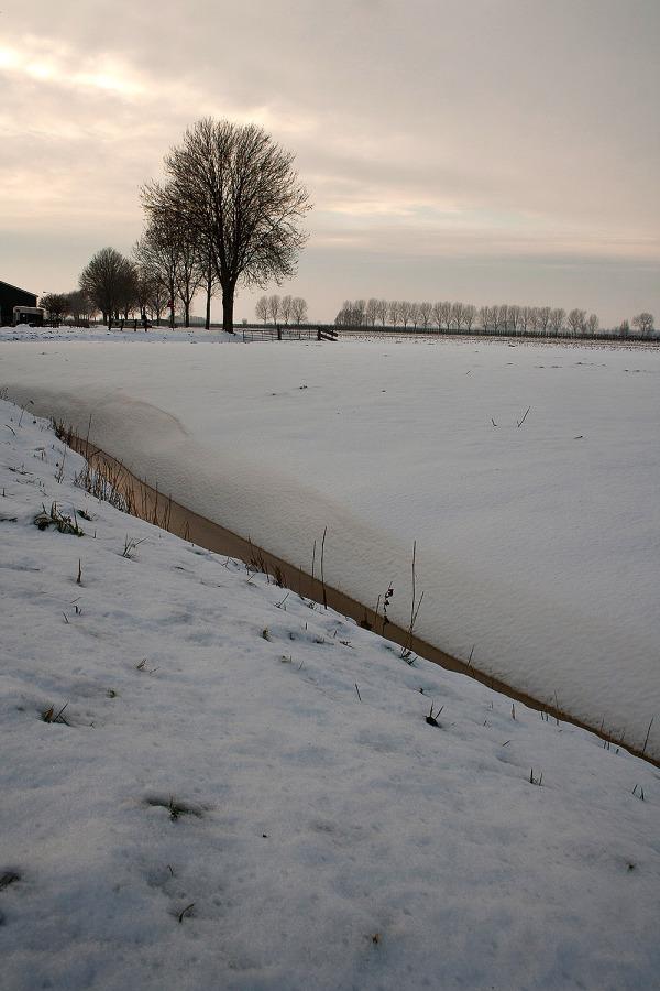 ameide holanda neve inverno árvore
