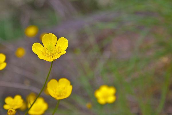 flor dourointernacional